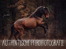 Authentische Pferdefotografie - Finde Deinen Weg!