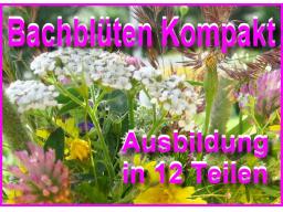 Webinar: Bachblüten Begleiter KOMPAKT 3 nach M. Gellisch
