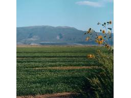 Webinar: Getreidegras - Grüne Lebenskraft - Mit der Natur im Reinen