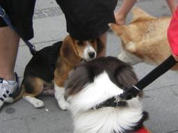 Webinar: Hunde-Alltags-Quiz