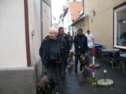Webinar: Sachkunde Hund - Hund und Recht