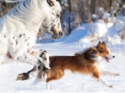 """Webinar: Infowebinar zur Fachausbildung """"Traditionelle Chinesische Medizin für Tiere"""""""