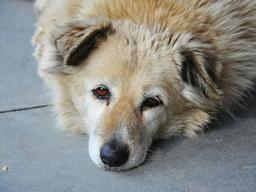 Webinar: IBD - Chronisch-entzündliche Magen-Darmerkrankungen bei Hunden und Katzen