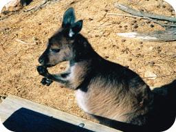 Webinar: Australien Webinar - Von Darwin - Alice Springs