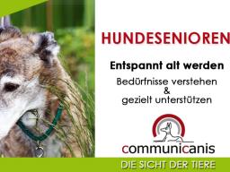 Webinar: Hundesenioren Intensivwebinar