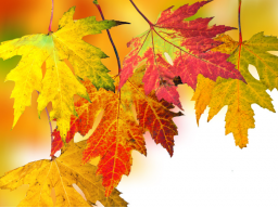 Webinar: Die TOP 20 Nahrungsmittel für den Herbst-Putz