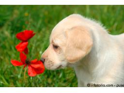 Webinar: Bachblüten für Tiere - eine Einführung