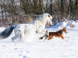 Webinar: Traditionelle Chinesische Medizin für Tiere - Block 2