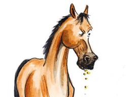 Webinar: Stilles Leid - Magengeschwüre beim Pferd Teil 1