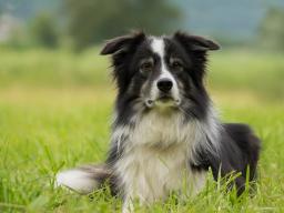 Webinar: Infowebinar: Ausbildung Ernährungsberater Hund / Katze. Inhalte, Überblick & Fragen.