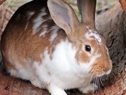 Webinar: Haltung und Ernährung von Kaninchen und Meerschweinchen