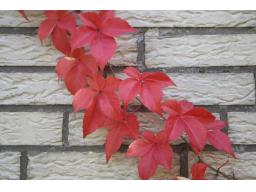 Webinar: Herbst Spaziergang