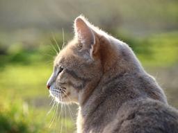 Webinar: BARF für Katzen - Warum eine artgerechte Fütterung für Samtpfoten so wichtig ist