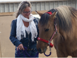 Webinar: Rootfinder® meets Horsesense / Business-Ladies