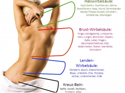 Webinar: Rückenschmerzen? - Ursache und Wirkung