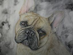 Webinar: Wir zeichnen einen Hund mit Farbstiften