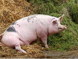 Webinar: gekonnter Umgang mit inneren Schweinehunden