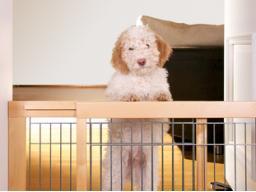 Webinar: Sicherheit zu Hause mit Hund & Baby - Sicher durchs Krabbelalter