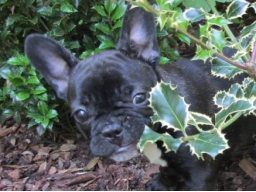 Webinar: Hundeernährung für Welpenbesitzer