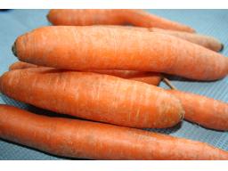 Webinar: Karotine - bunt und gesund
