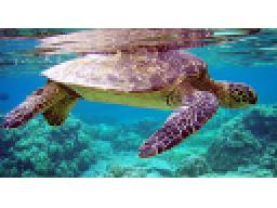 Webinar: Rohstoff-Trading Trendfolgesystem - Turtles Strategie