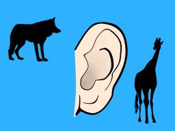 Webinar: 4-Ohren-Modell der Gewaltfreien Kommunikation