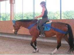 Webinar: Körperbandagen für Pferde