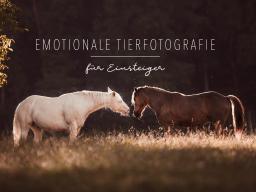 Webinar: Emotionale Tierfotografie für Einsteiger