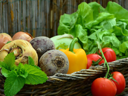 Webinar: Grundsätze der veganen Ernährung