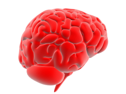 Webinar: Wie und vor allem warum Gehirnentfaltungstraining auch bei Ihnen funktioniert