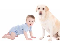 Webinar: *Onlinekurs  für Schwangere mit Hund *- Zusammenführung Hund & Baby - Hund auf Baby vorbereiten