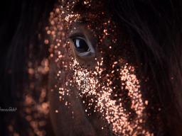 Webinar: Kreativität in der Pferdefotografie