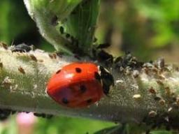 Webinar: Keine Schädlinge mit Effektiven Mikroorganismen?