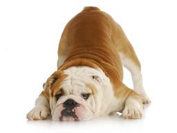 Webinar: Hundeyoga - Teil 1-10