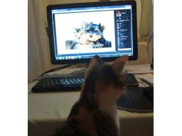 Webinar: BARF für Hunde und Katzen - mehr Abwechslung im Napf