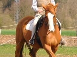 Webinar: Mentaltraining für Reiter