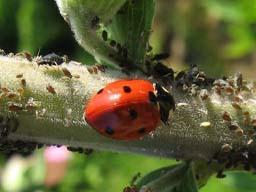 Webinar: Schädlinge im Garten - Lösungen ohne Chemie
