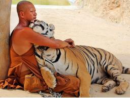 Webinar: Glücklich wie ein Shaolin-Mönch - Das Geheimnis
