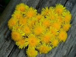 Webinar: Lust auf Liebe