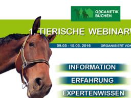 Webinar: Organetik am Pferd (Israel Kaatsch)