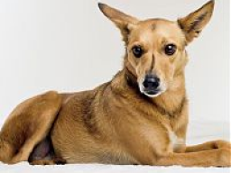 Webinar: Ist jeder Juckreiz bei Hunden gleich eine Allergie