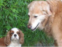 Webinar: Ernährungs- und Gesundheitsberater für Hunde