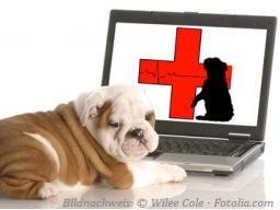 Webinar: Erste Hilfe beim Hund Teil 1