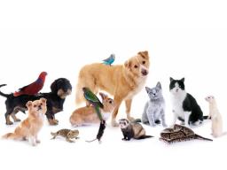 Webinar: Traditionelle Chinesische Medizin für Tiere