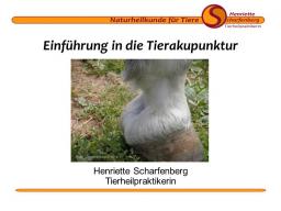 Webinar: Einführung in die Tierakupunktur