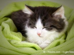 Webinar: Ausbildung Farblichtanwendung für Tiere
