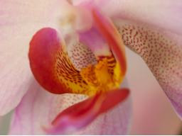 Webinar: Kräuter für die Sinne & Liebespflanzen
