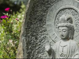 Webinar: Meditation und Achtsamkeit  für ein gesundes und bewusstes Leben