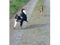 Webinar: Das Training mit mehreren Hunden