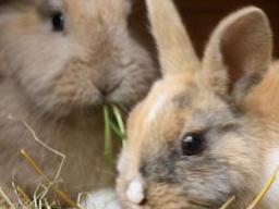 Webinar: Wildkräuter in der Tierenährung -Kaninchen, Meerschweinchen und Chinchilla